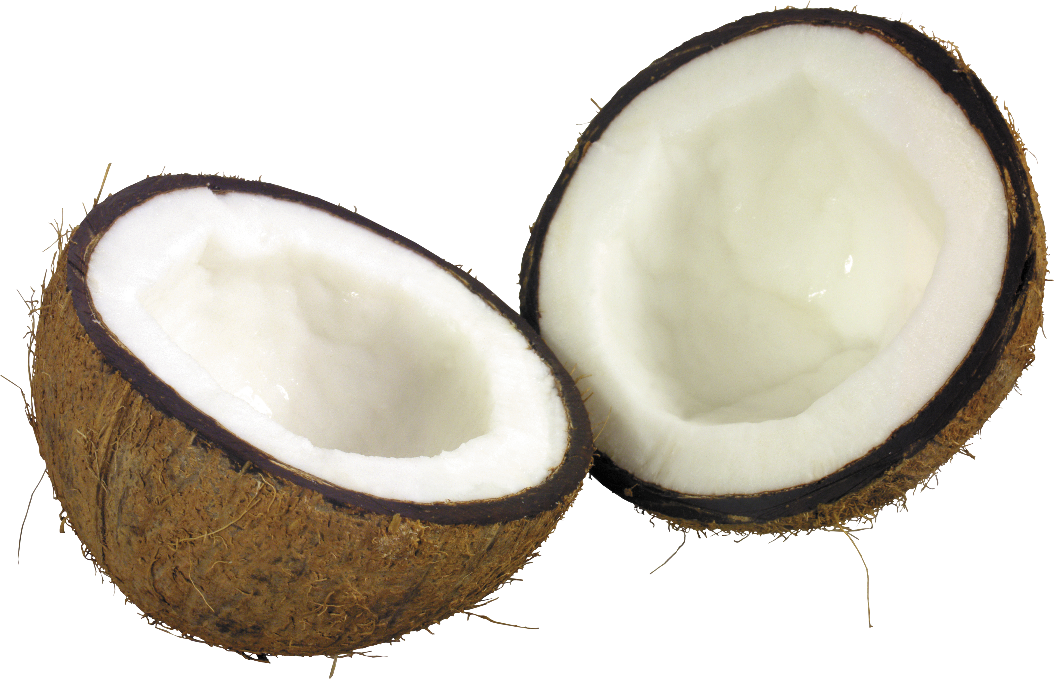 Coconut PNG - 26620