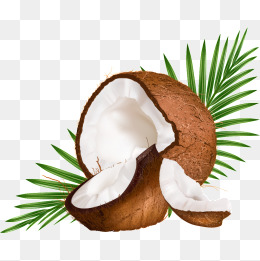 Vector Coconut - Coconut PNG