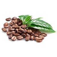 Coffee Beans Png Clipart PNG Image - Coffee Beans PNG