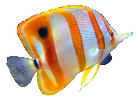 Fish PNG - 5056