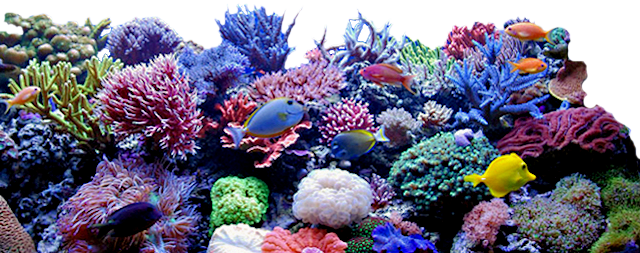 Coral PNG HD - 120632