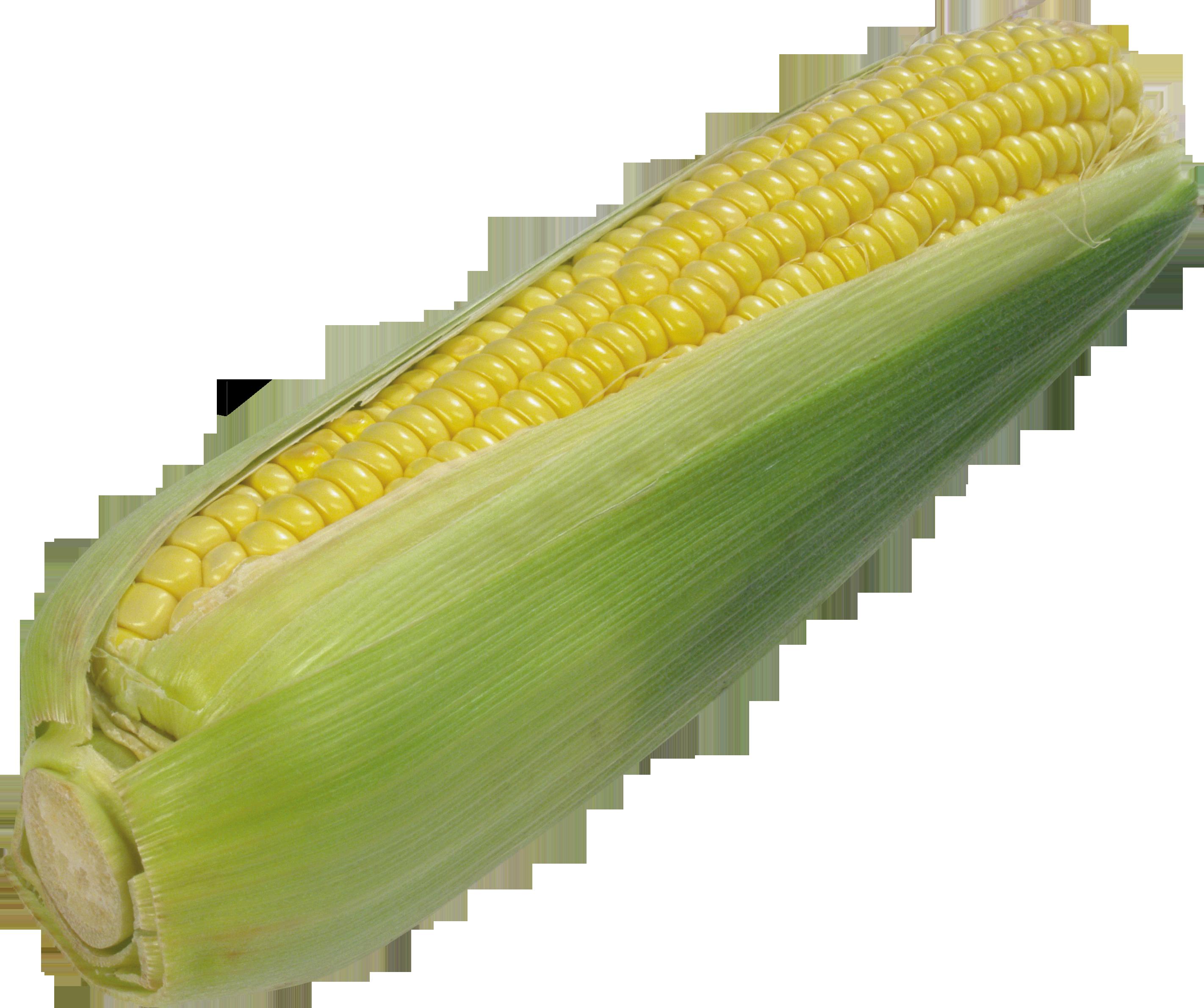 Corn PNG-PlusPNG.com-2843 - Corn PNG
