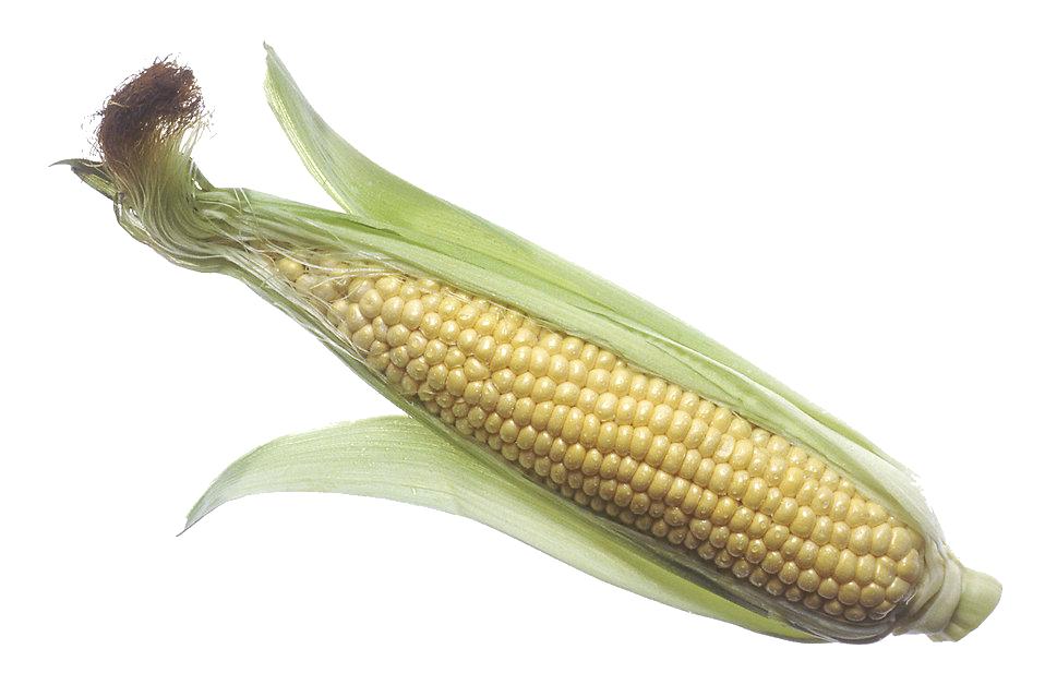 Corn PNG - 26331