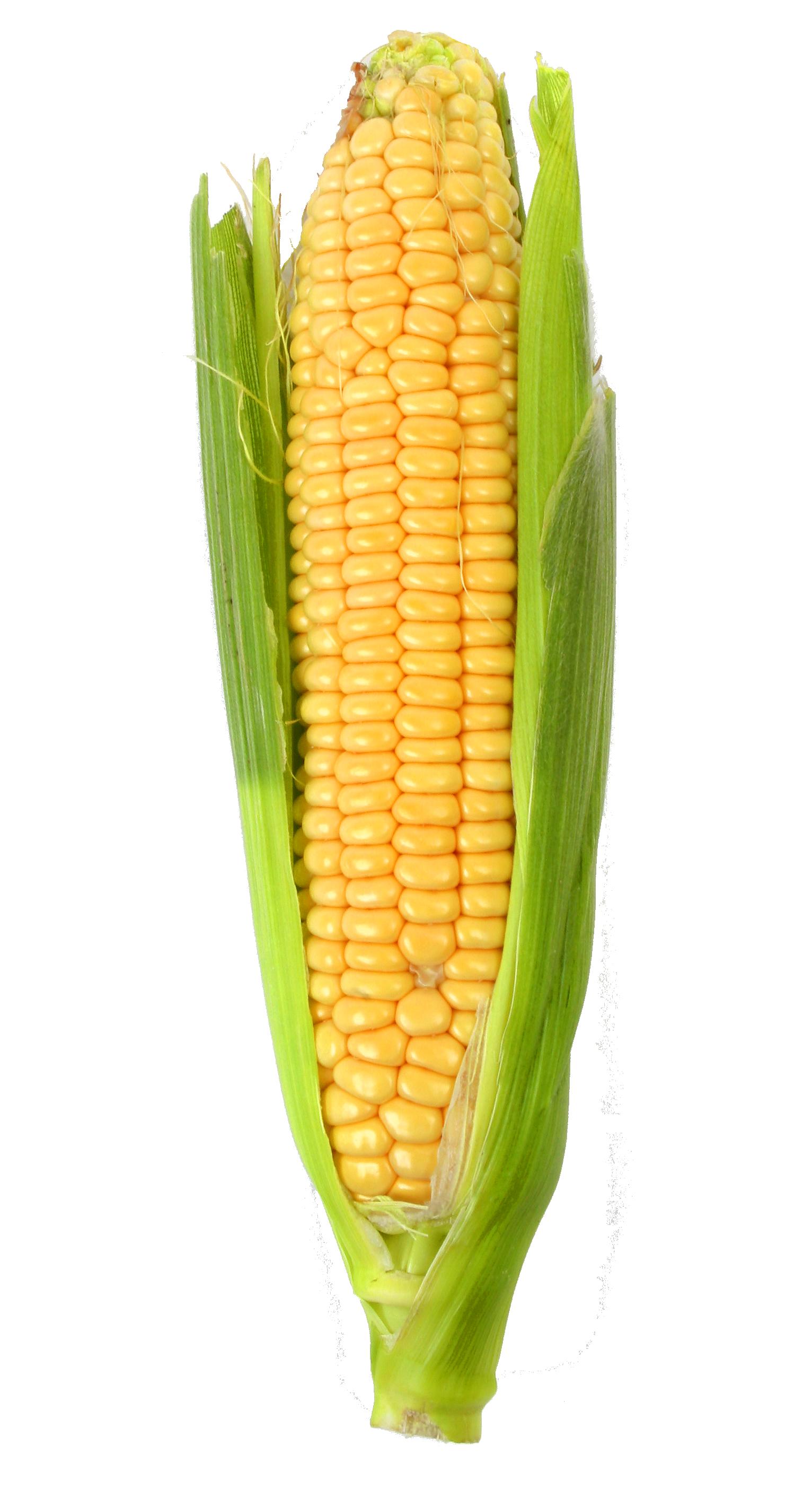 Corn PNG - 26320