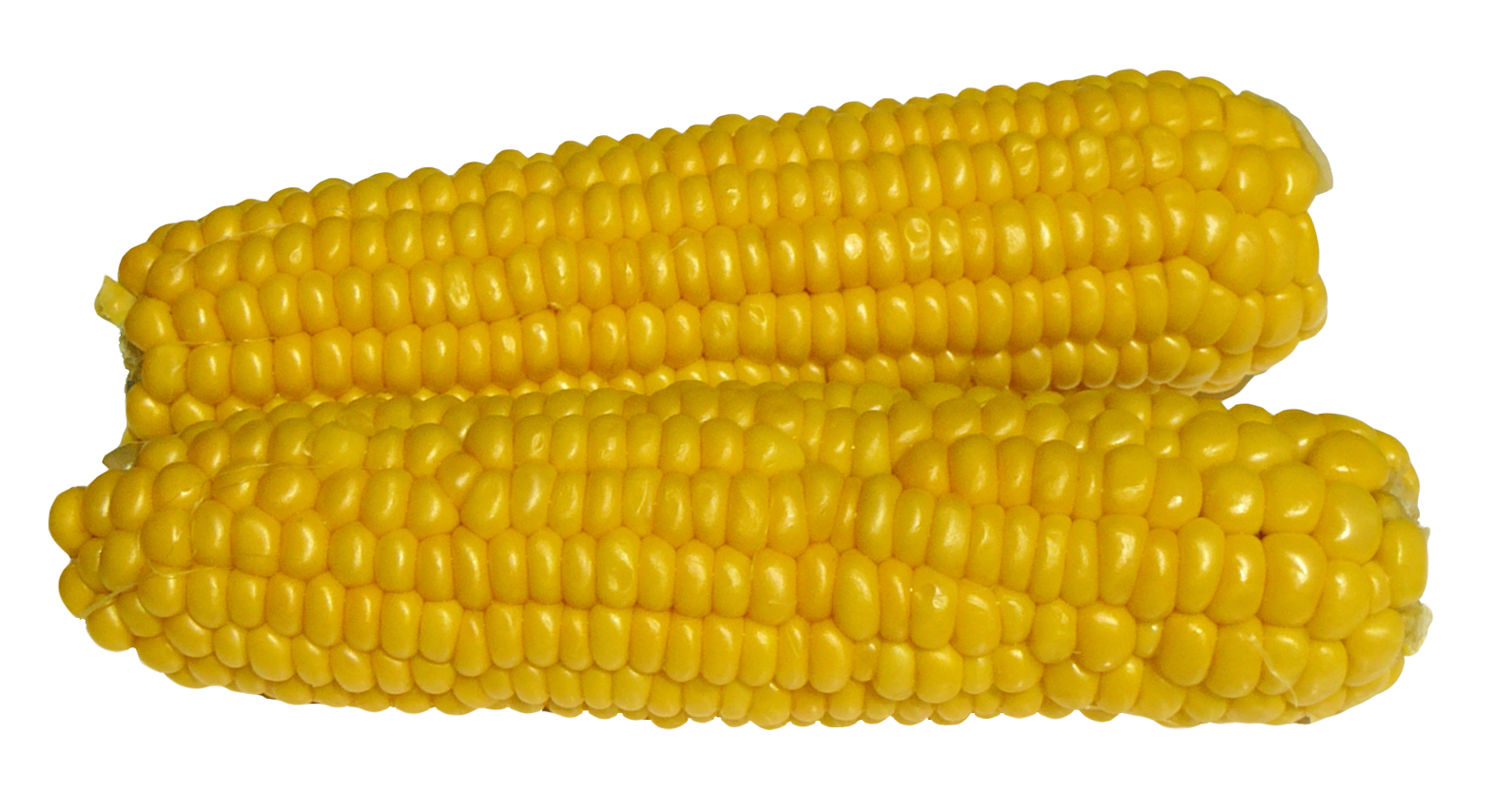 Corn PNG - 13671