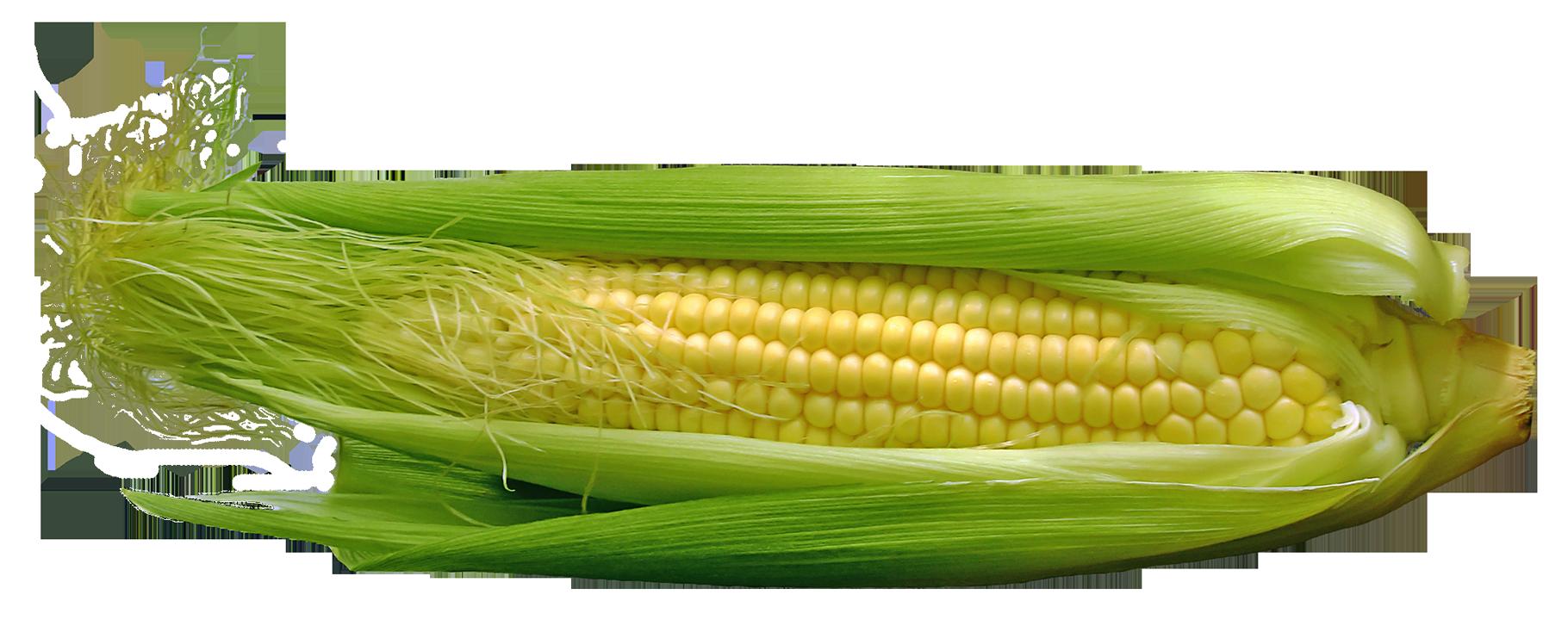 Corn PNG - 13672