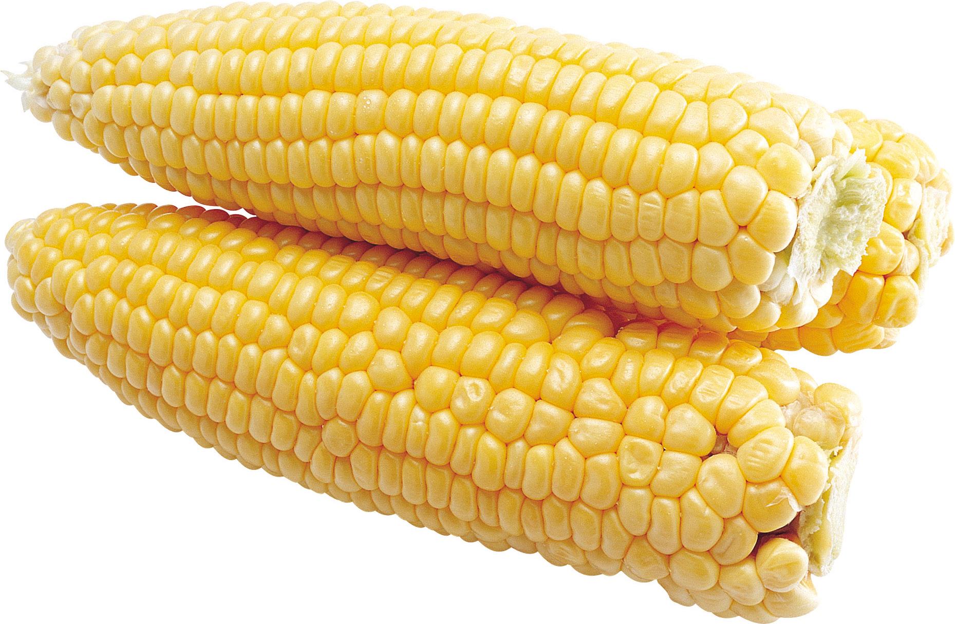 Corn PNG - 26328