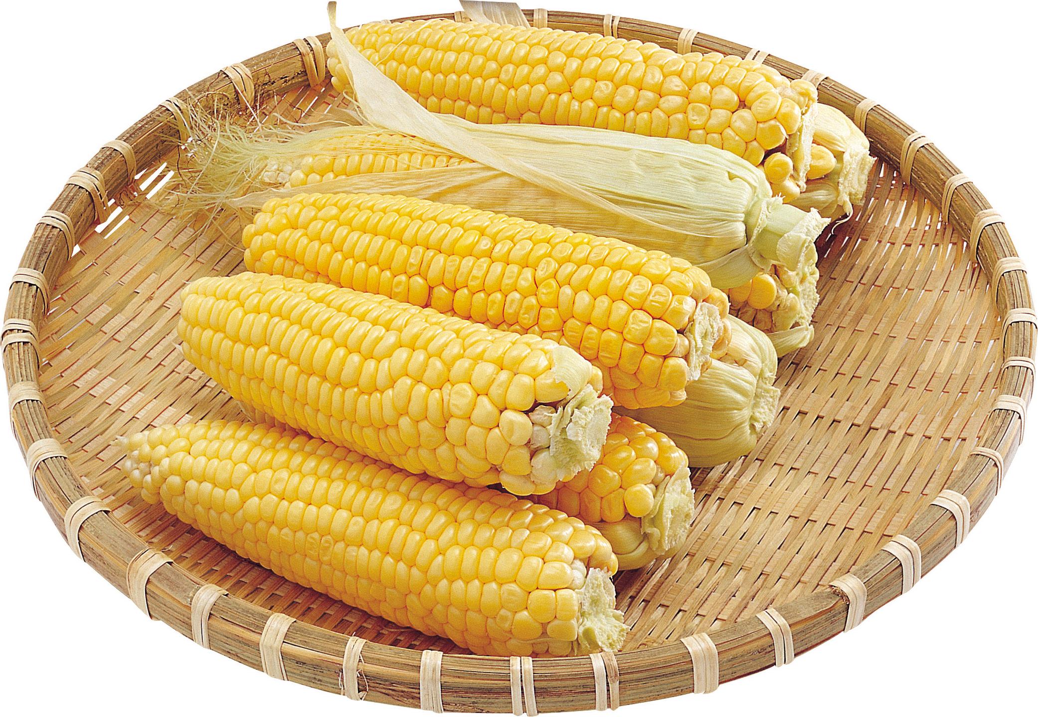 Corn PNG - 13674