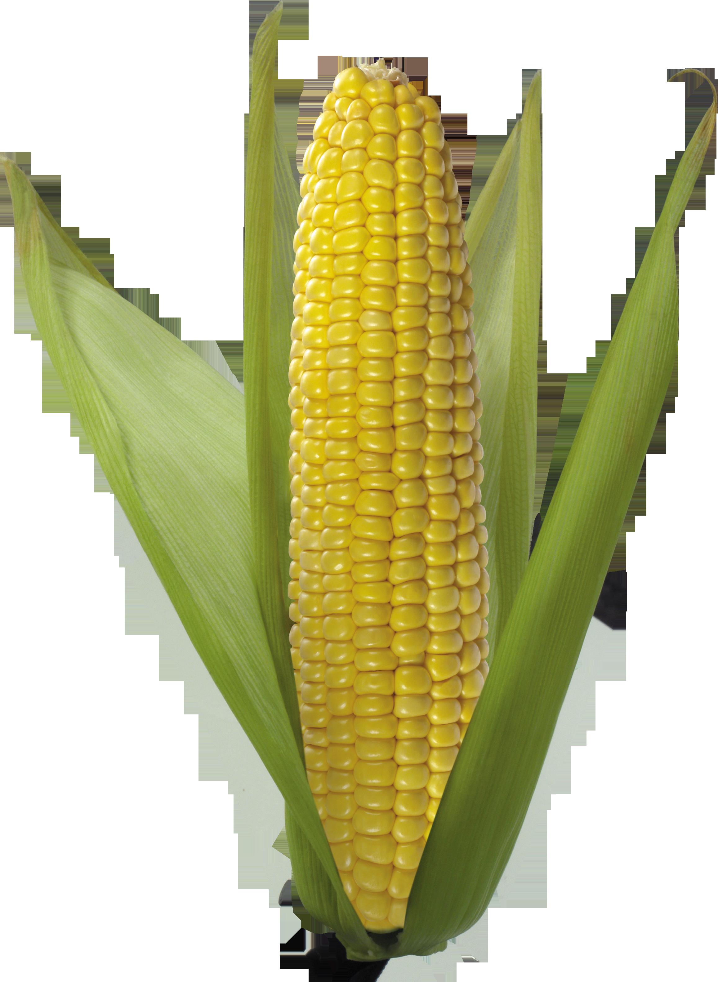 Corn PNG - 26326