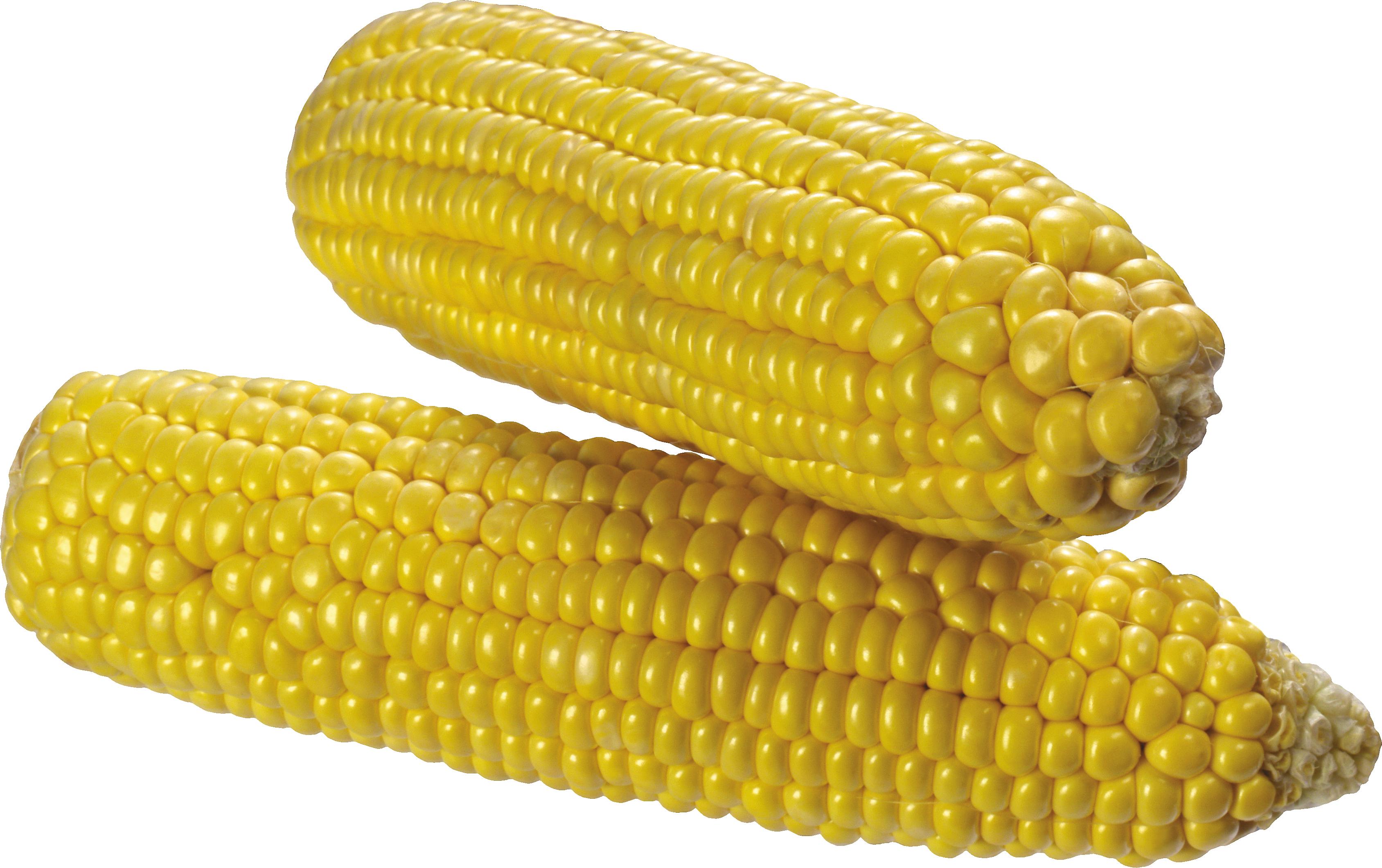 Corn PNG - 13667