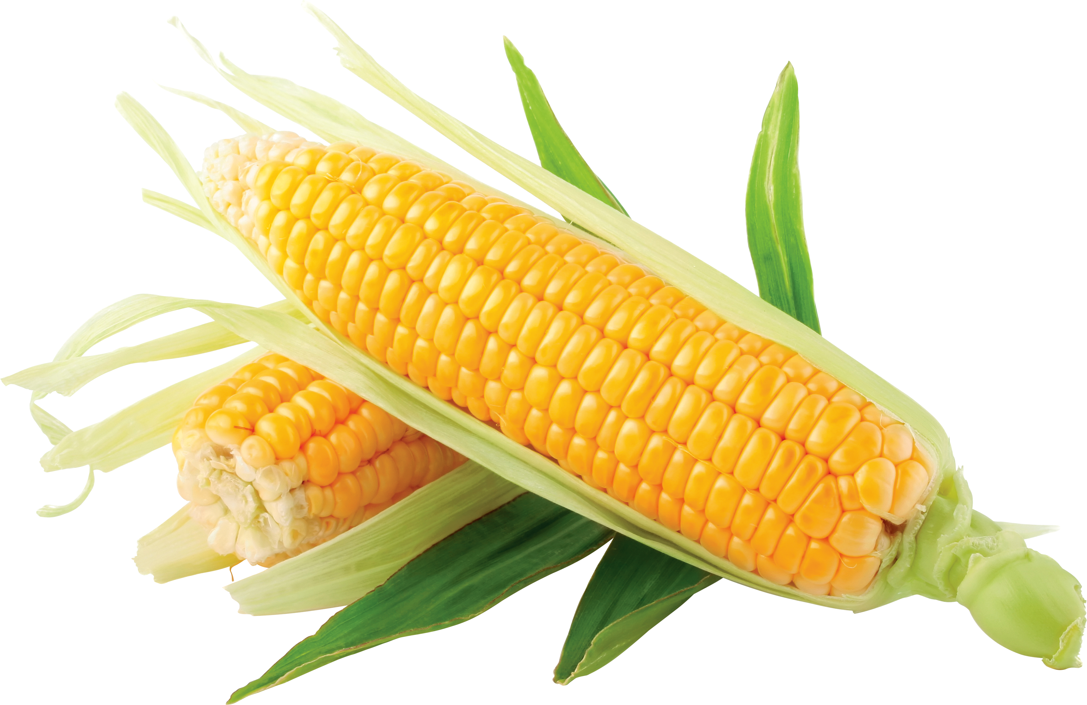 Corn PNG - 26321
