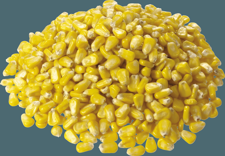 Corn PNG - 26323