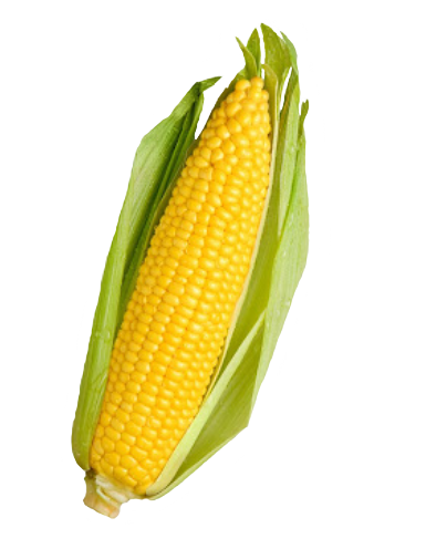 i made this corn transparent - Corn PNG