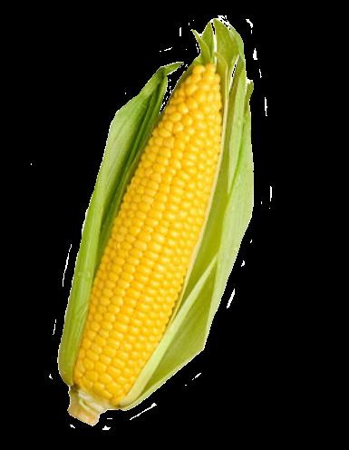 Corn PNG - 26325