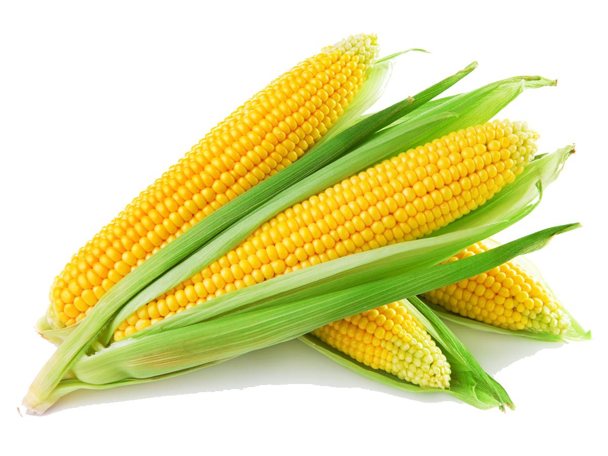 Sweet Corn - Corn PNG