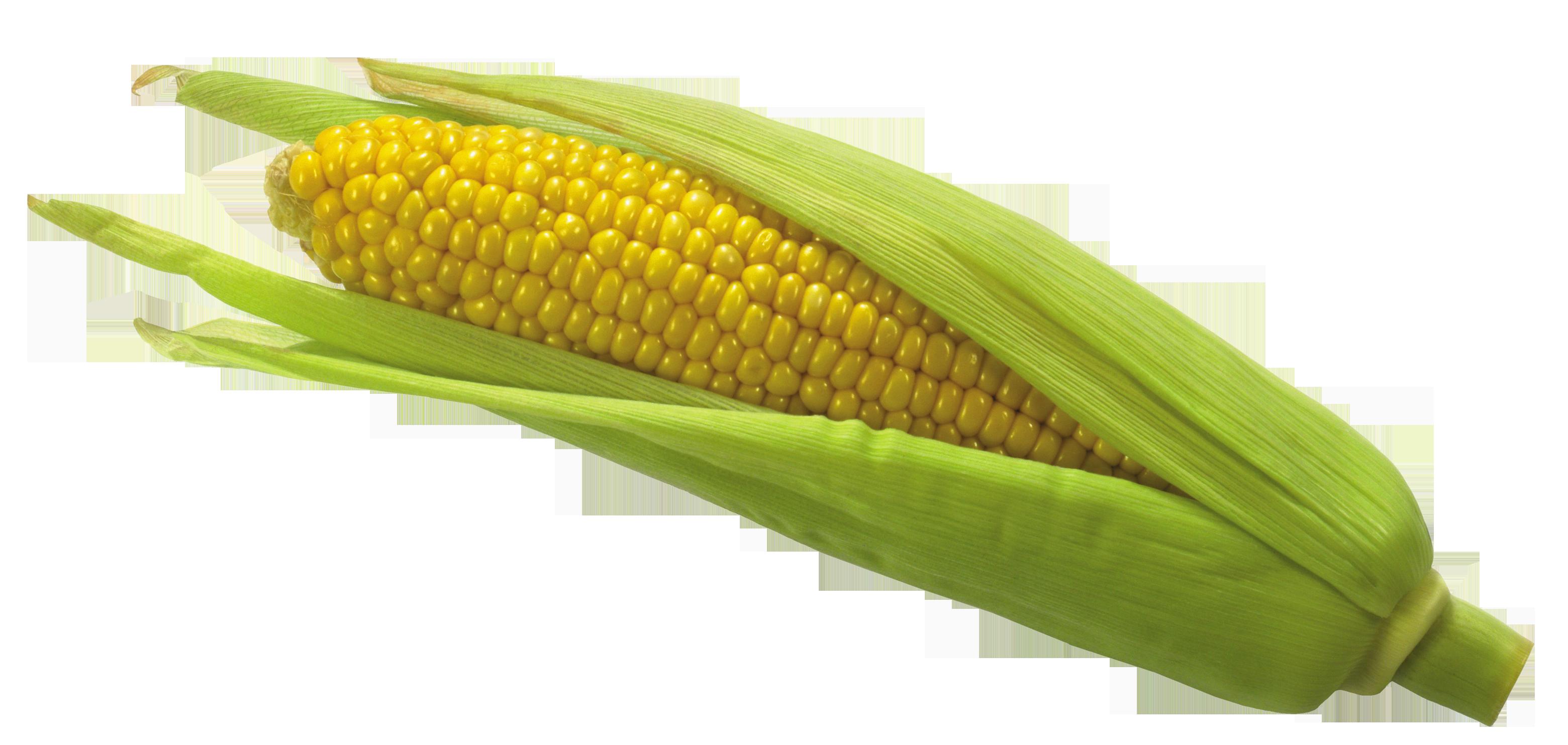 Transparent Corn PNG - Corn PNG