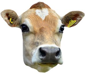 Cow Head PNG HD - 140163