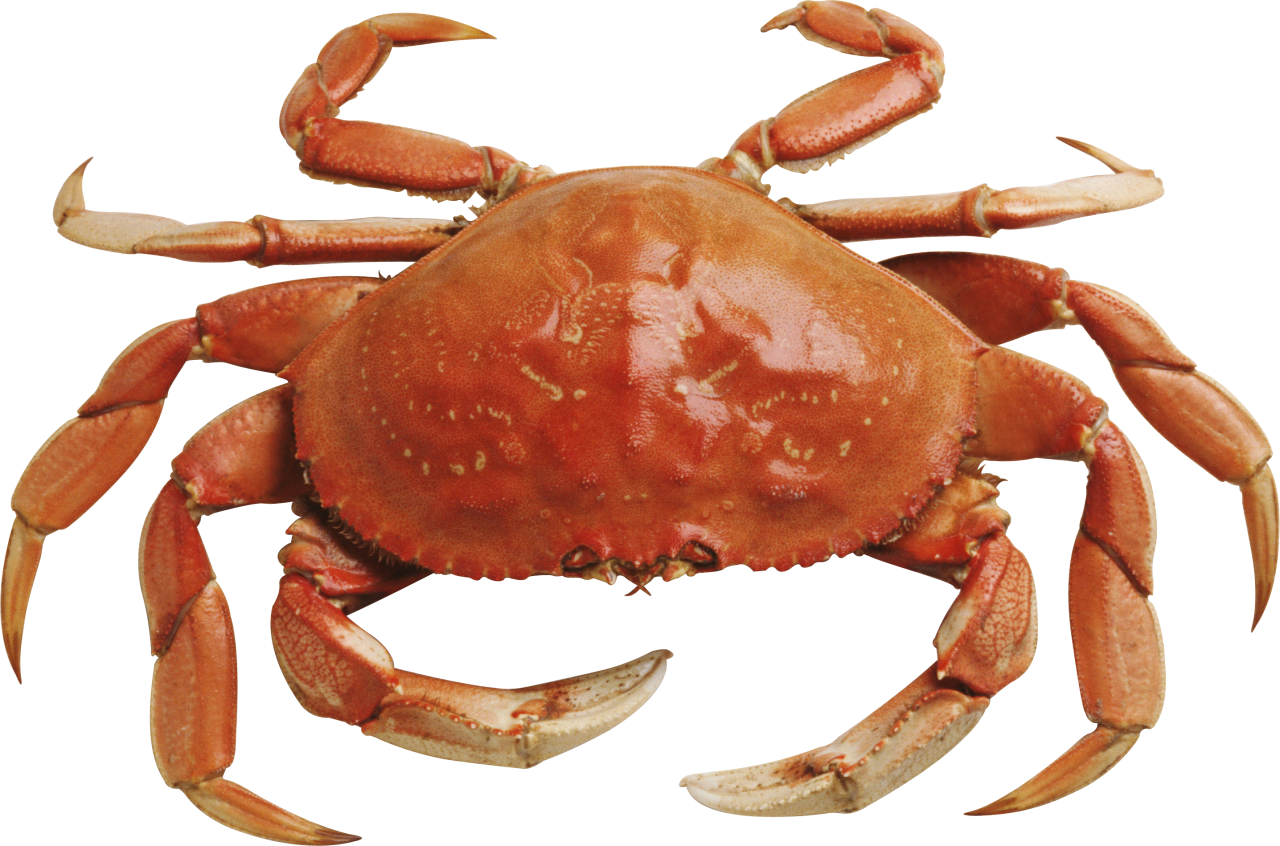 Crab HD PNG