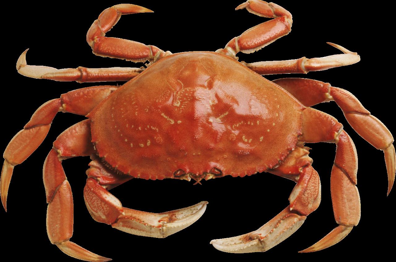 Crab HD PNG
