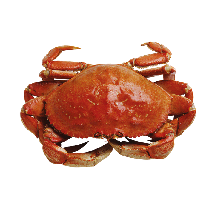 Crab, Marine, Seafood - Crab HD PNG
