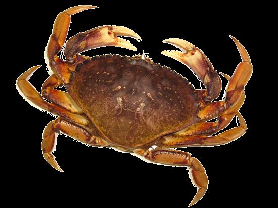 Crab Png Image PNG Image - Crab HD PNG
