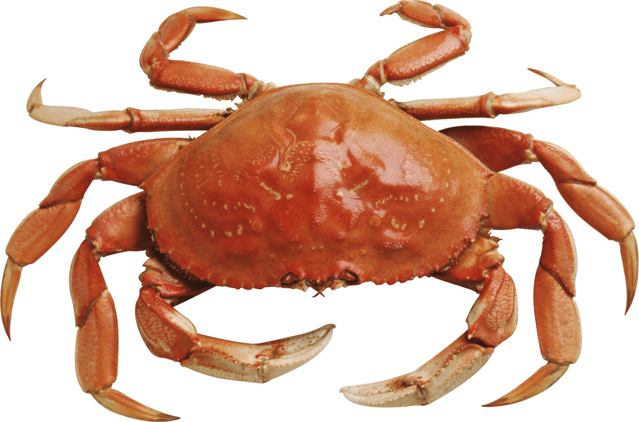 Crab Orange - Crab Image PNG HD