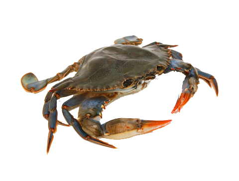 Crab Picture PNG Image - Crab Image PNG HD