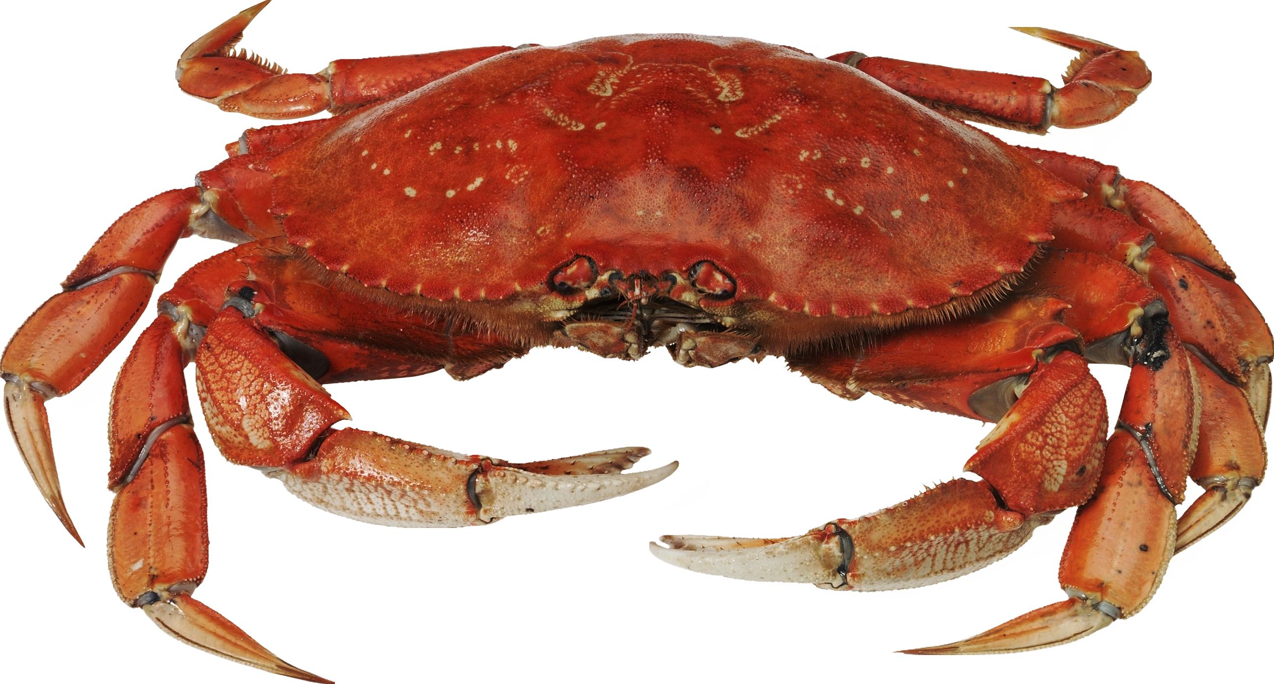 Crab PNG - Crab HD PNG - Crab Image PNG HD