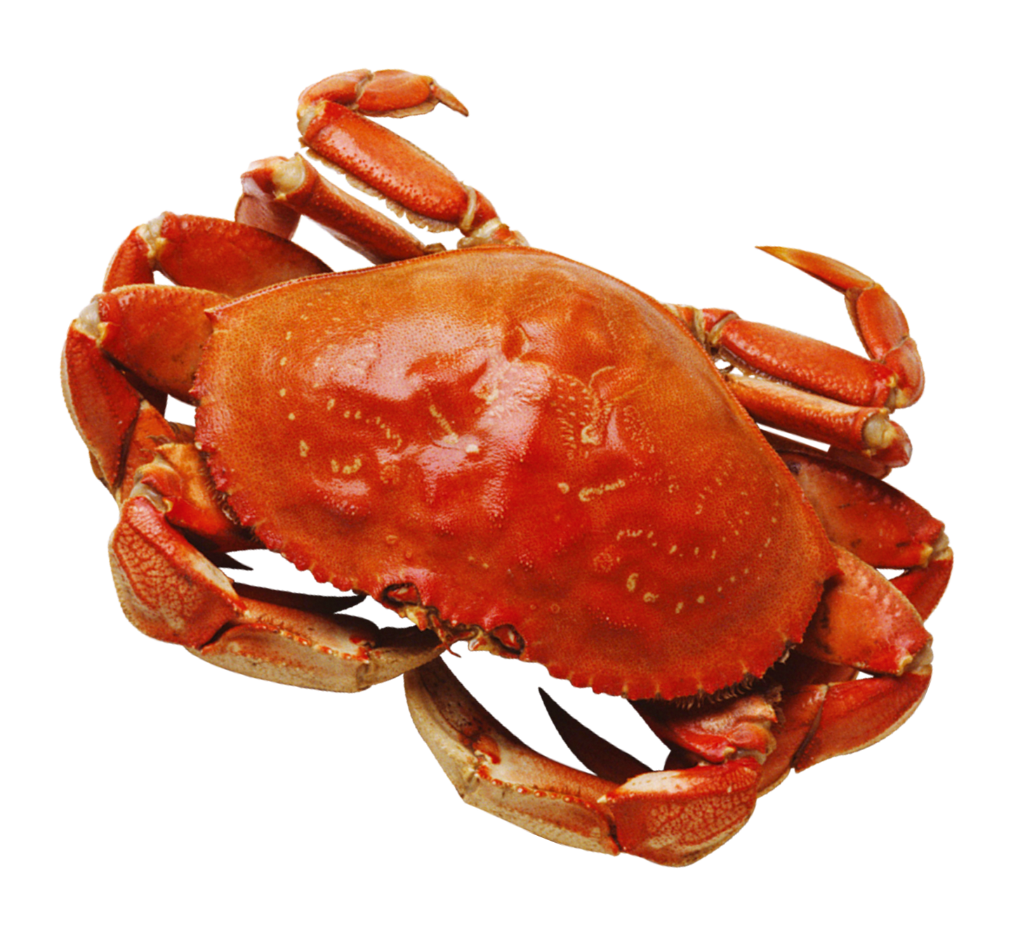 crab Remove your crab from the pot, and rinse under cool water in the sink this will stop the cooking process, cool down the shell enough for you to handle, and rinse off any icky crab guts that may have oozed out during cooking.