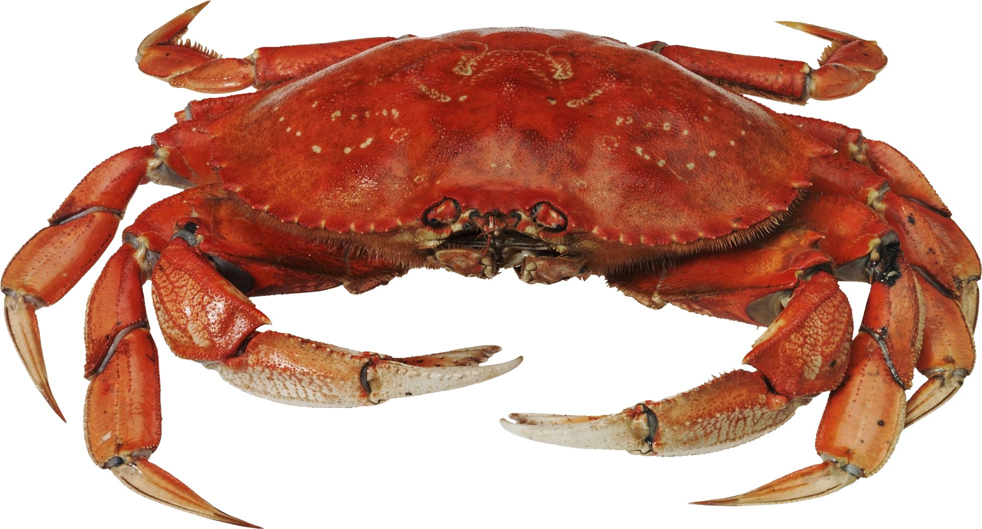 Crab PNG - 11887