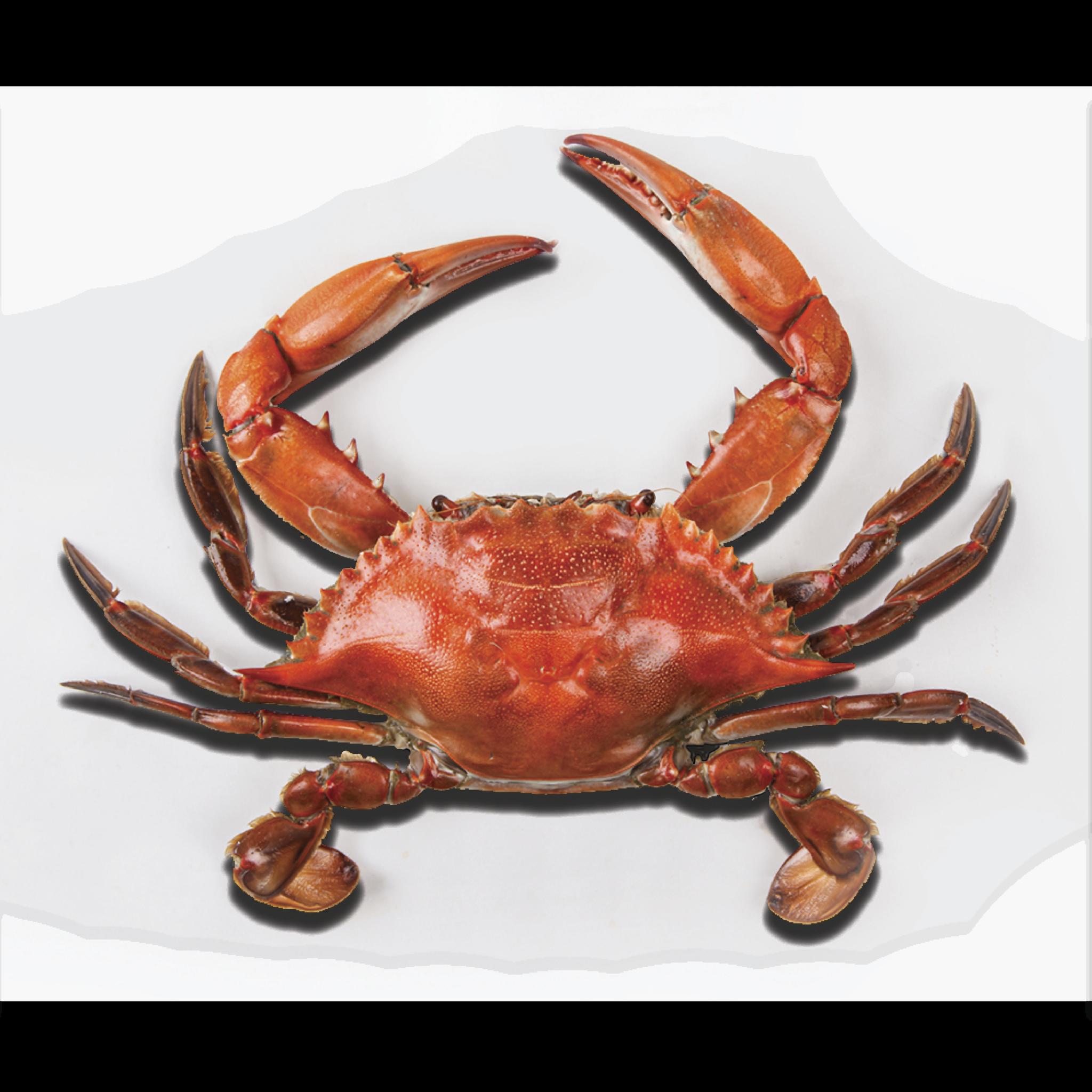 Crab PNG - 11889