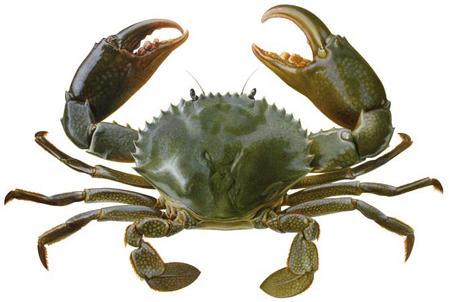 Crab PNG - 11890