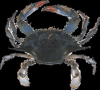 Crab - Crab PNG HD