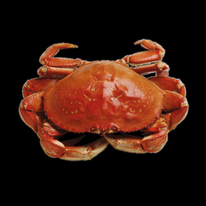 Crab, Marine, Seafood - Crab PNG HD