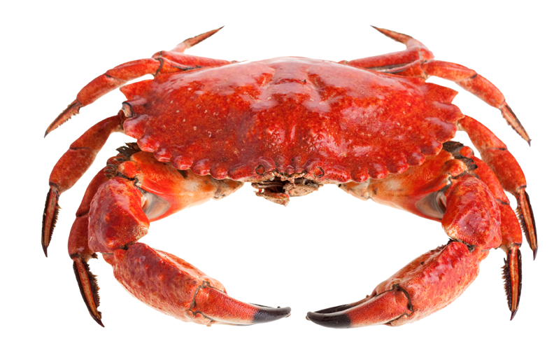 Crab PNG - Crab PNG HD