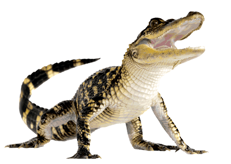 Crocodile HD PNG-PlusPNG.com-740 - Crocodile HD PNG