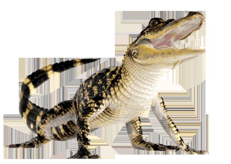 Crocodile HD PNG - 118143