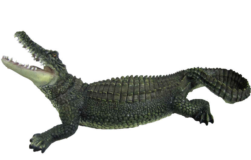 Crocodile PNG - Crocodile HD PNG