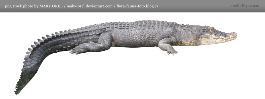 Crocodile Png Hd PNG Image - Crocodile HD PNG