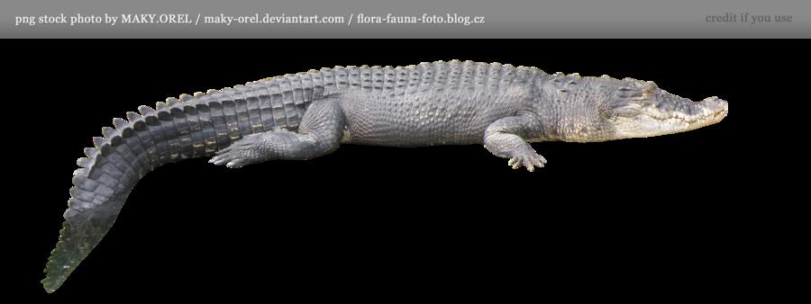 Crocodile HD PNG - 118147
