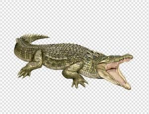 Crocodile HD PNG - 118148