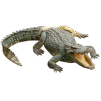 Crocodile Png PNG Image - Crocodile HD PNG