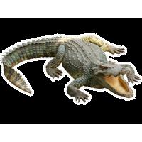 Crocodile HD PNG - 118137