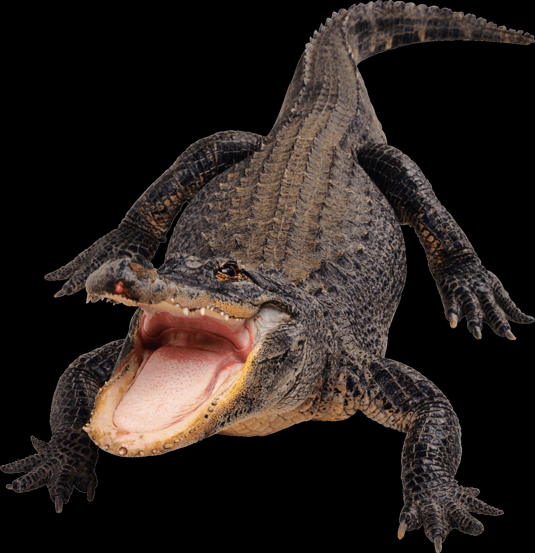 Crocodile PNG - 19873