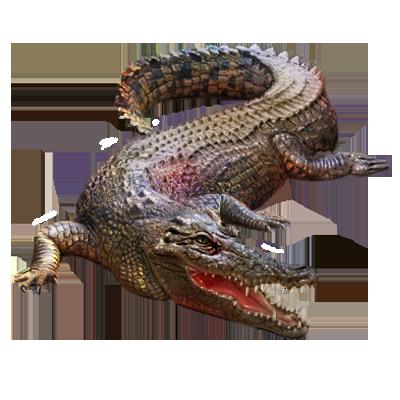 Crocodile PNG - 19870