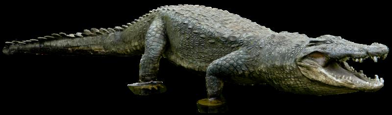 Crocodile PNG - 19879