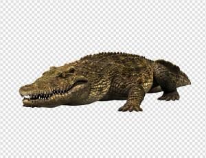 Crocodile PNG - 19881