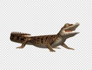 Crocodile PNG - 19878