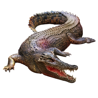 Crocodile PNG - Crocodile PNG - Crocodile PNG HD Images