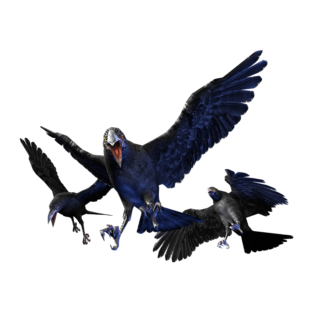Cr crow.png - Crow HD PNG